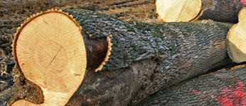 tree-felling-cumbria